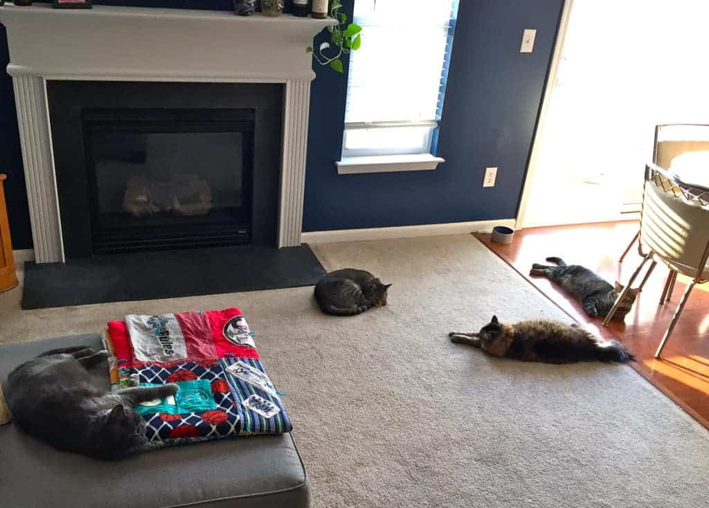 four cats off the eaten path