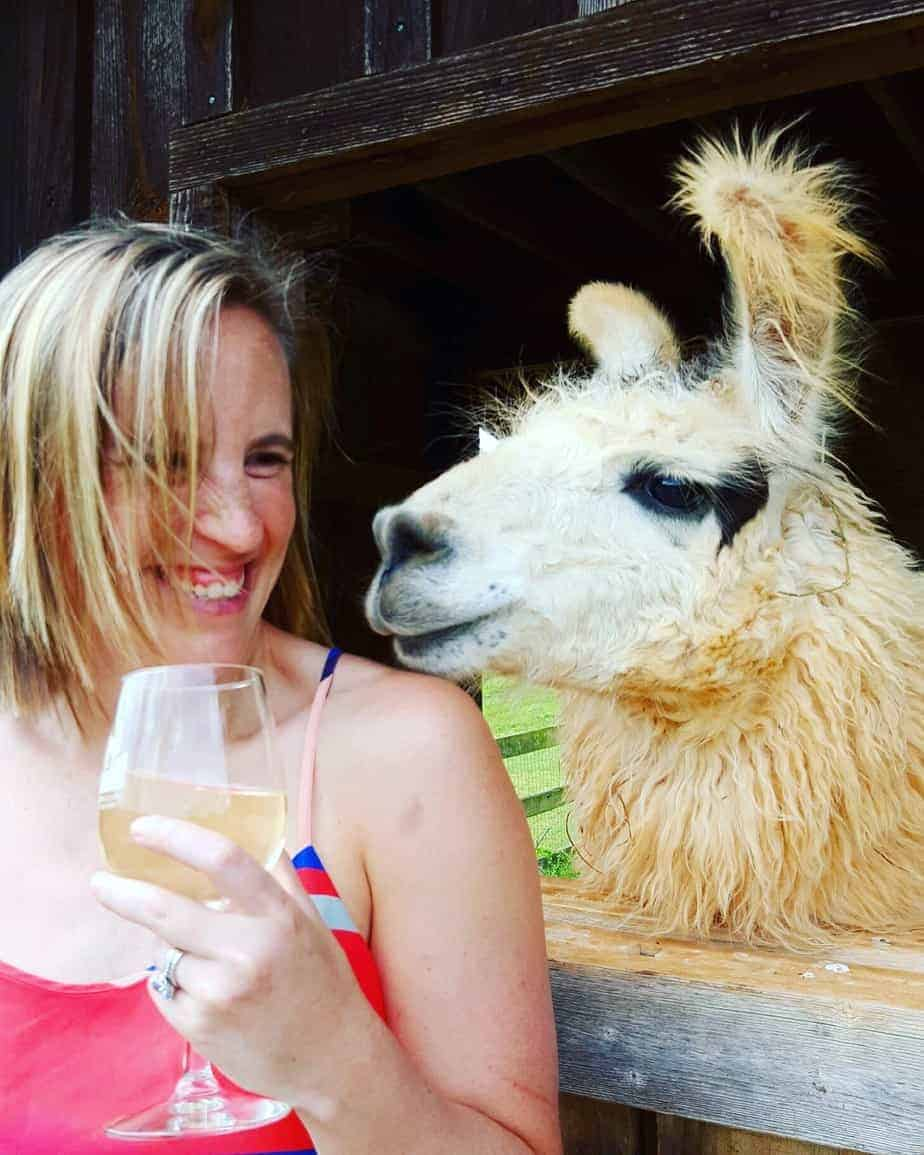 divine llama vineyards