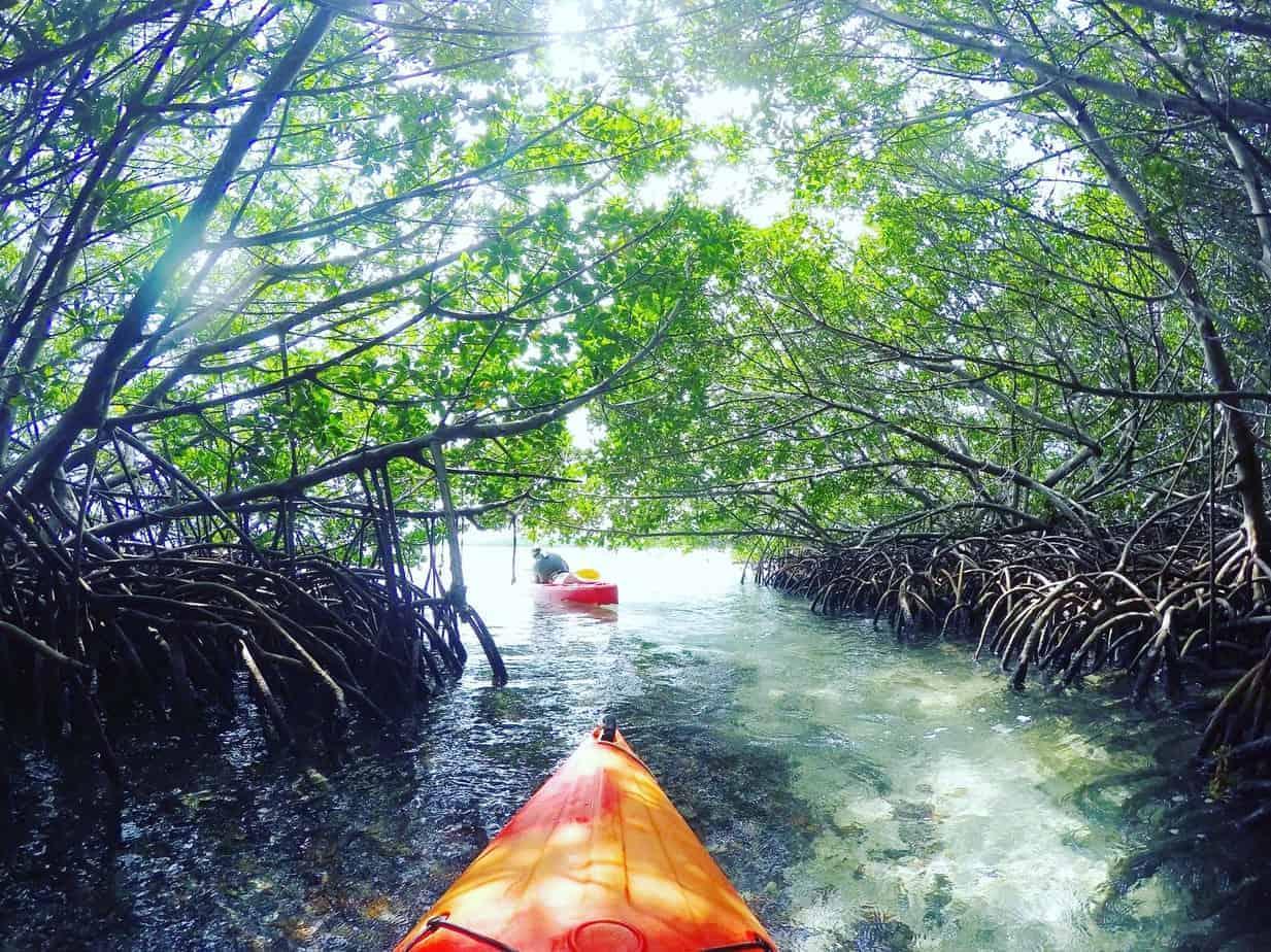 mangrove kayaking in key west after driving through florida