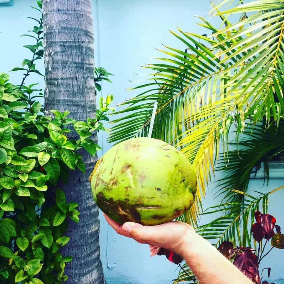 florida road trip fresh coconut in key west