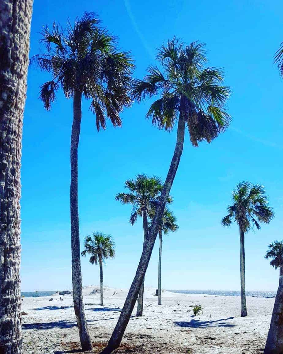camping cocktails and palm trees on hunting beach state park in sc