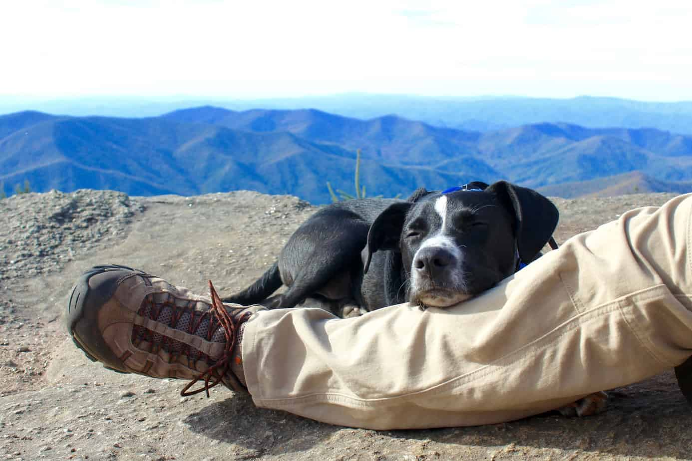 hiking with a dog and camping cocktails at mount mitchell state park in north carolina