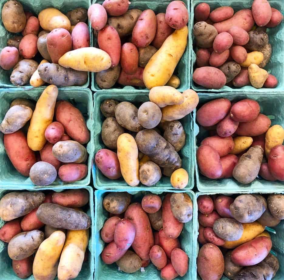 mini colorful potatoes at the charlotte regional farmers market