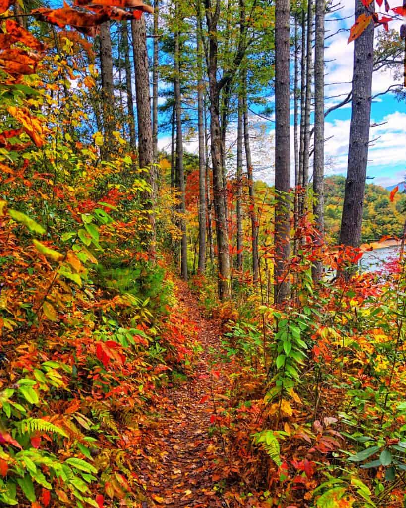 hiking trail with trees with red orange yellow and green leaves and a blue sky