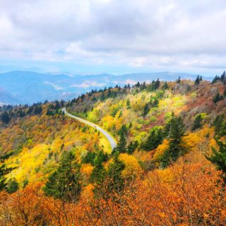 yellow and green leaves on trees with a road and blue ridge mountains in the background