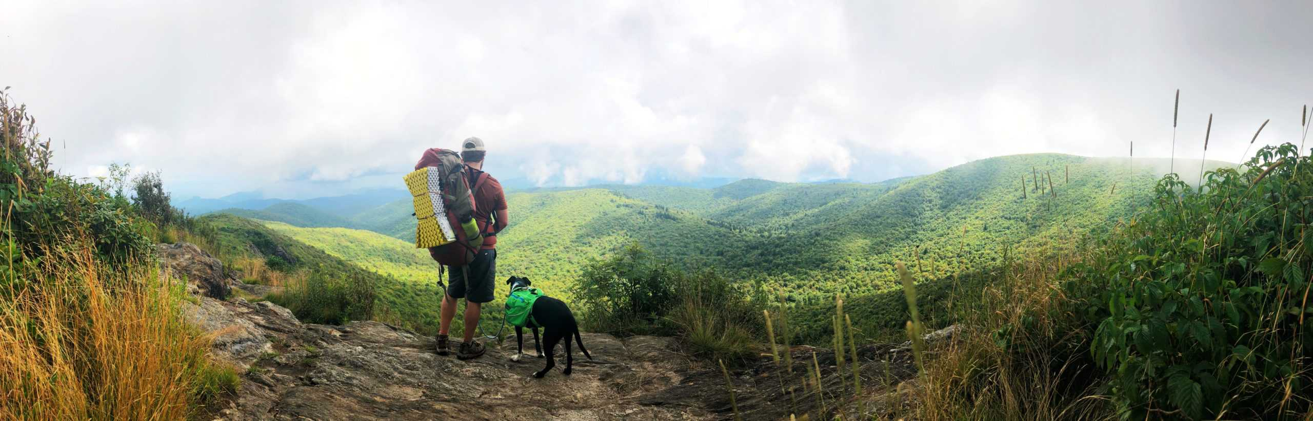 man and dog wearing backpacks on a hike and looking at a long range view on tennent mountain in north carolina